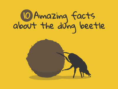 10 Amazing facts about the dung beetle