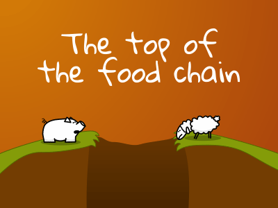 The top of the food chain